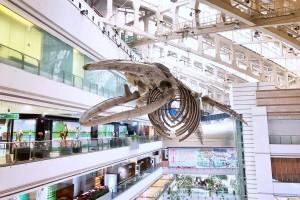 【毕业季】广州正佳自然科学博物馆准考证学子票
