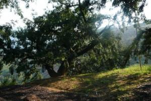 【绍兴】周末节假日通用!无需预约!39元抢诸暨香榧森林公园成人票!儿童身高1.2米(不含)以下免票哟~
